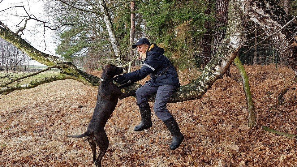 Spaß mit Inti in der Hundeschule Dresden und Tierpsychologie Sachsen