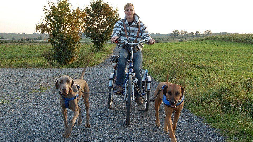 Micha mit Zughunden in der Hundeschule Dresden und Tierpsychologie Sachsen