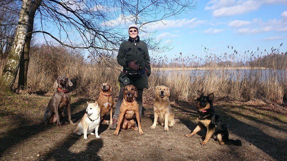 Herbst in der Hundeschule Dresden und Tierpsychologie Sachsen