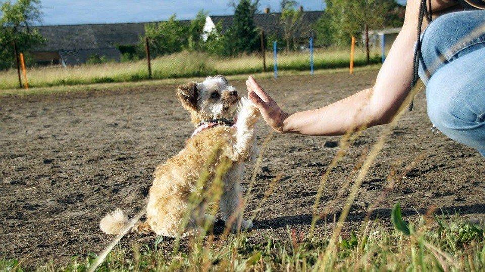 Jana und Ivy interagieren in der Hundeschule Dresden und Tierpsychologie Sachsen