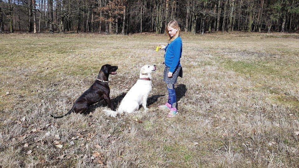Kind in der Hundeschule Kamenz
