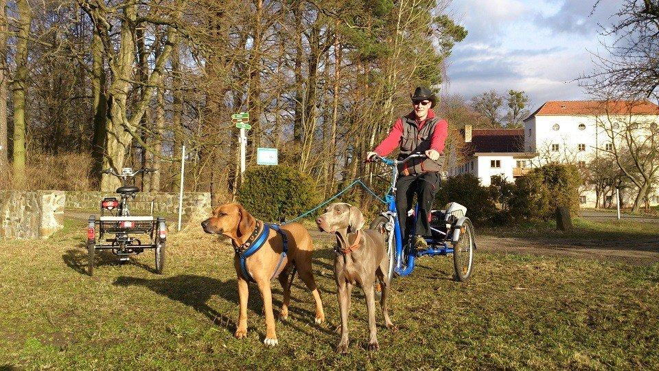 Zughunde in der Hundeschule Dresden und Tierpsychologie Sachsen