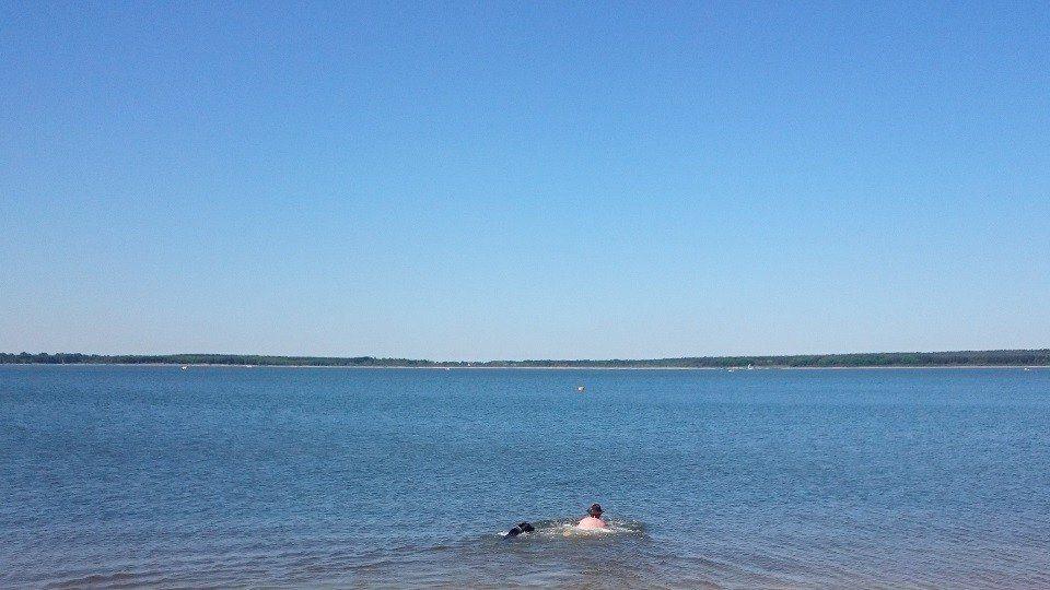 Hundesschwimmen in der Ostsee