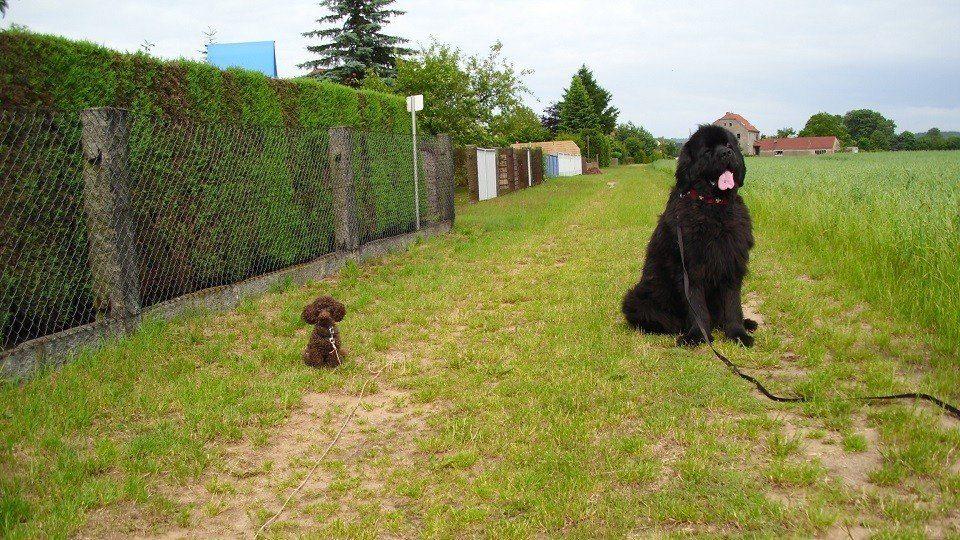 Mini und Maxi in der Hundeschule Dresden