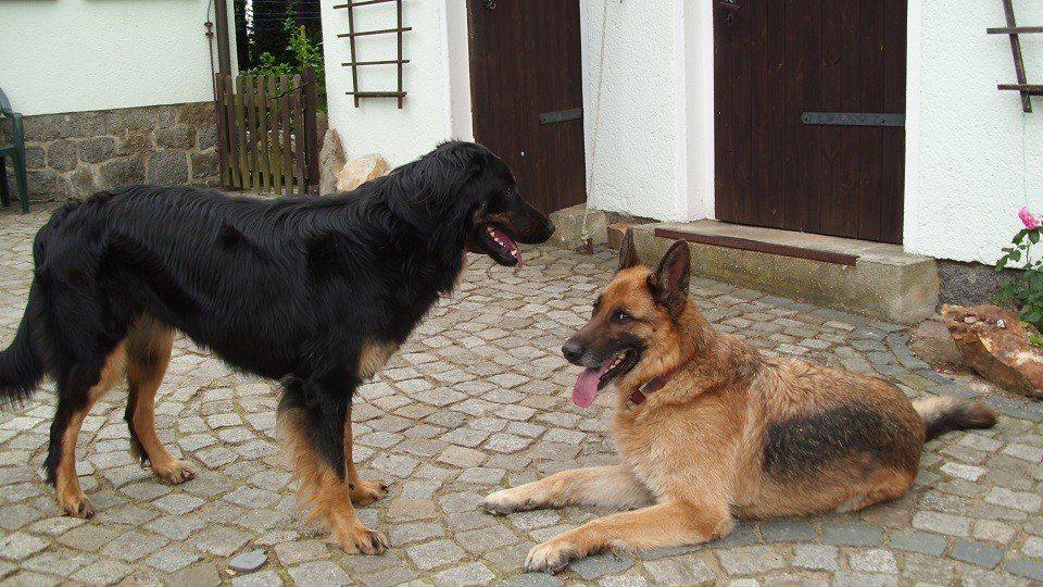 Hundebesprechung in der Hundeschule Kamenz