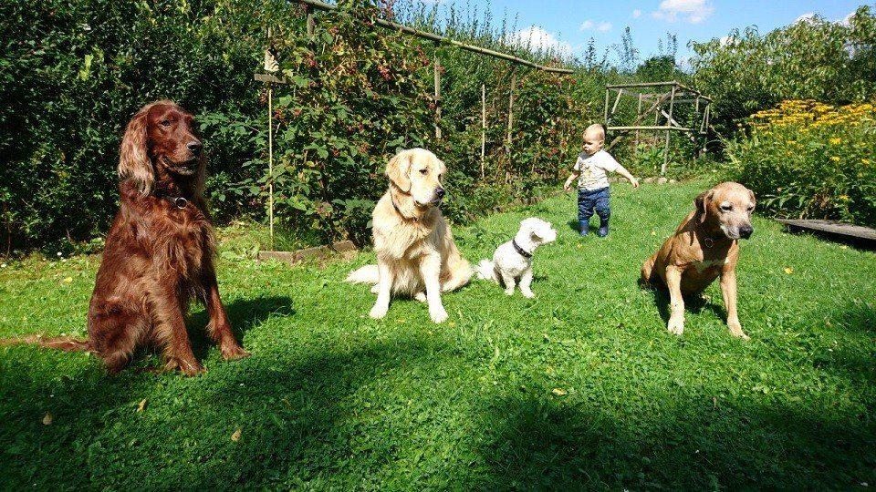 Baby allein mit 4 Hunden in der Hundeschule Dresden und Tierpsychologie Sachsen