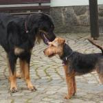 Zwei hübsche Hunde in der Hundeschule Kamenz