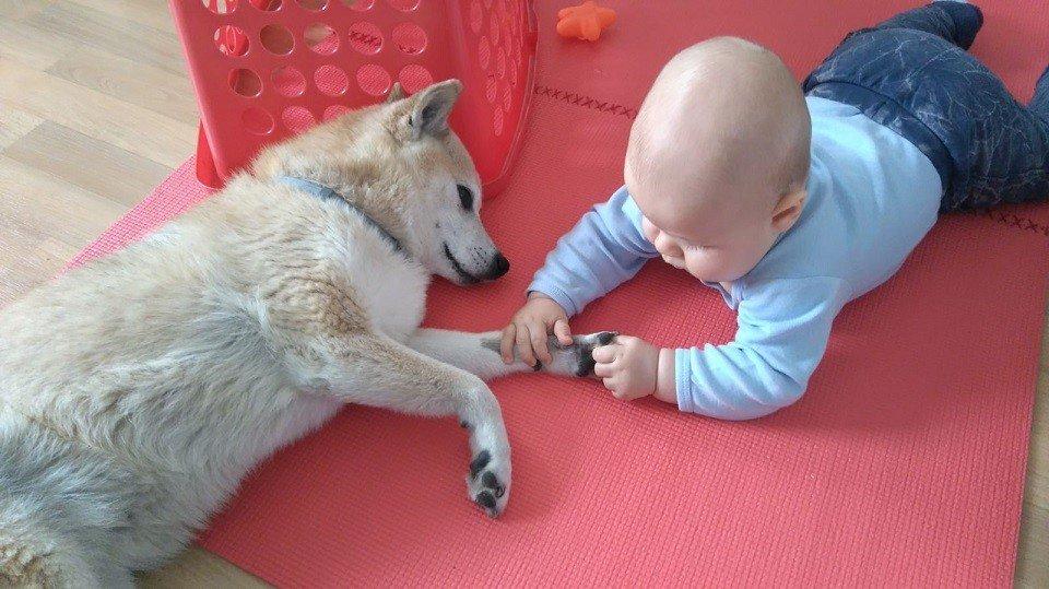 Baby mit Hund in der Hundeschule Dresden und Tierpsychologie Sachsen