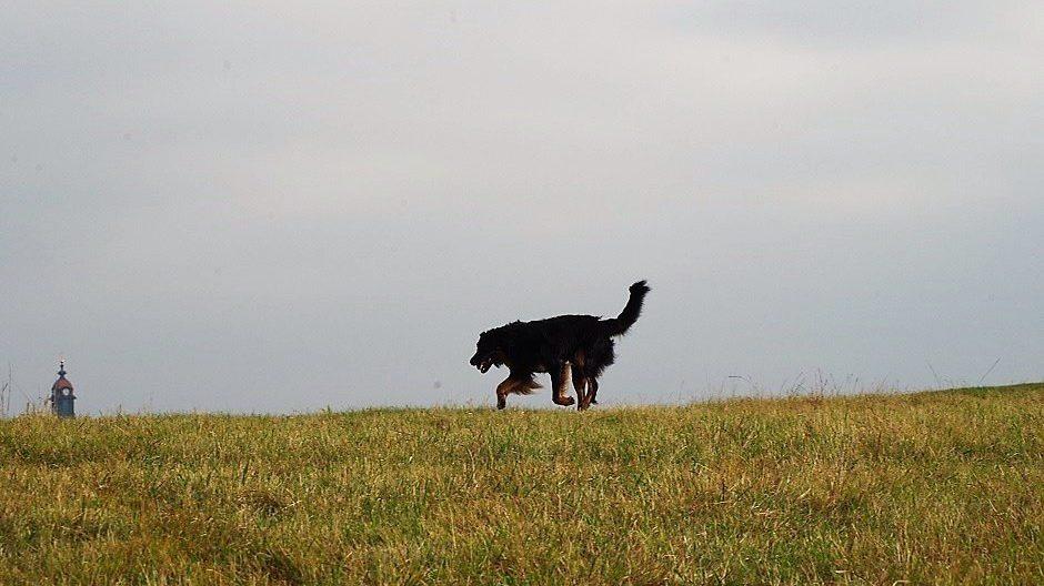 Eine schöne Hundestunde in Moritzburg