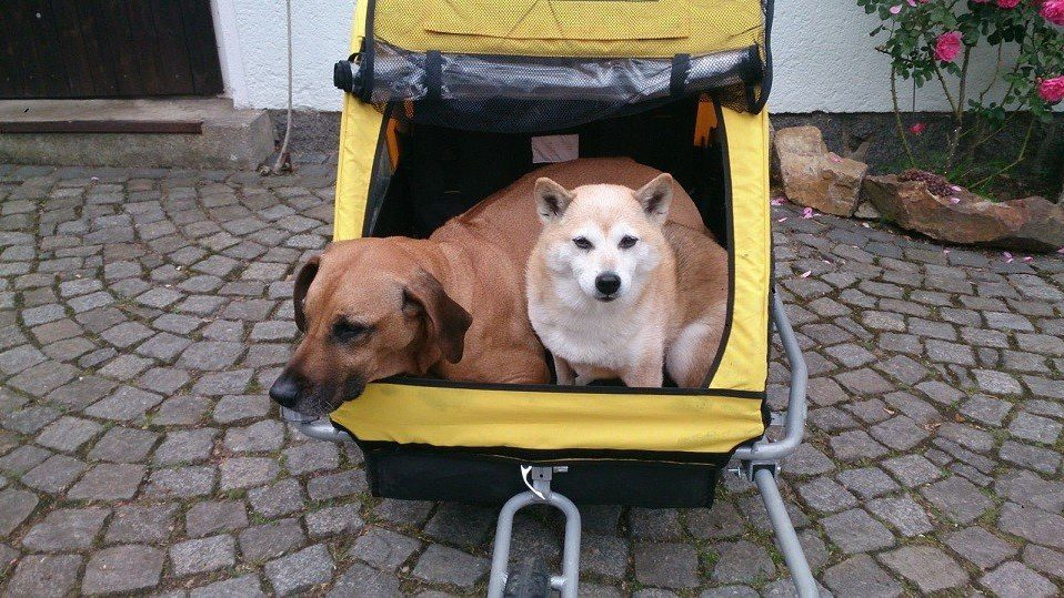Mal faul sein dürfen in der Hundeschule Kamenz