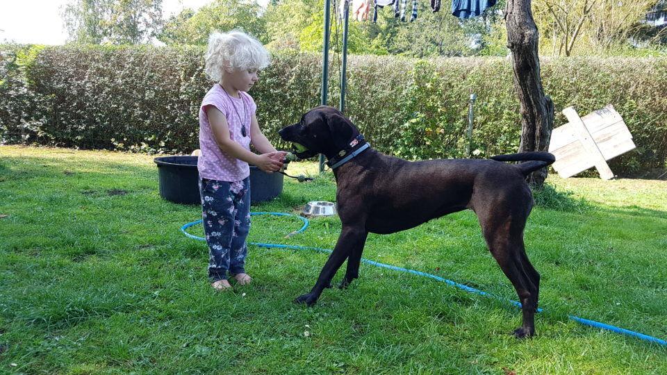 Kind Spielt mit Hund in der Hundeschule Dresden und Tierpsychologie Sachsen