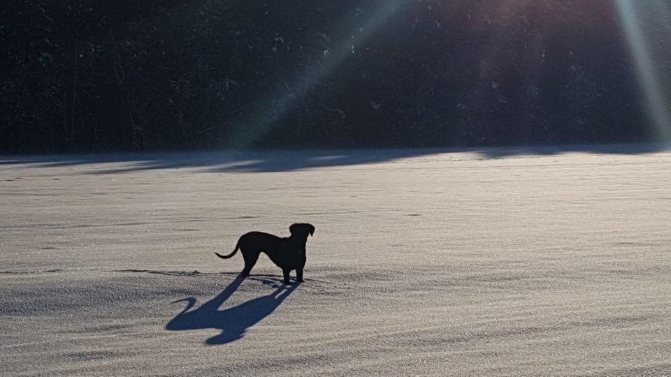 Wintertraum in der Hundeschule Dresden und Tierpsychologie Sachsen