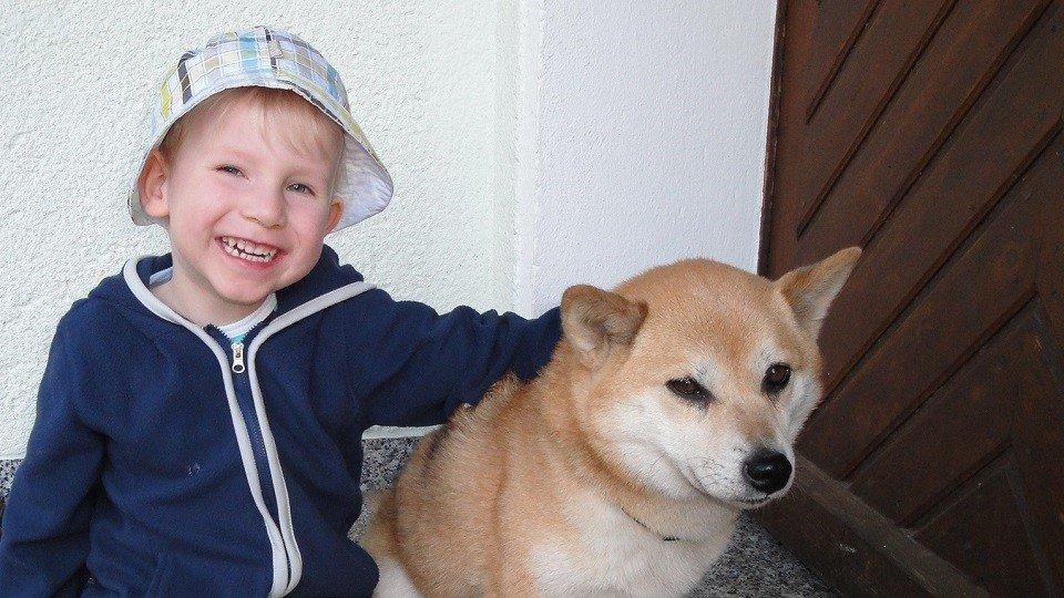 Marc-Lucas mit Nelly in der Hundeschule Dresden und Tierpsychologie Sachsen