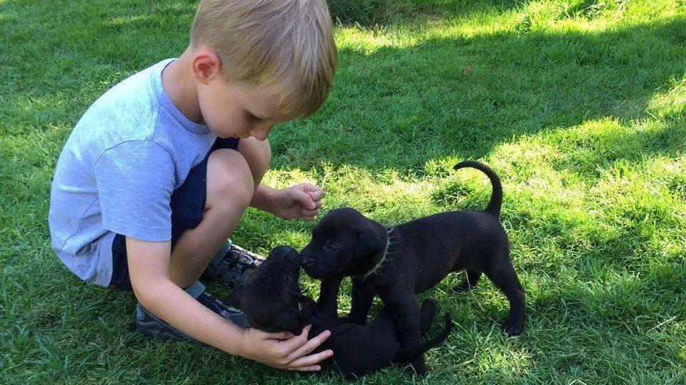 Hundebabys in der Hundeschule Dresden und Tierpsychologie Sachsen