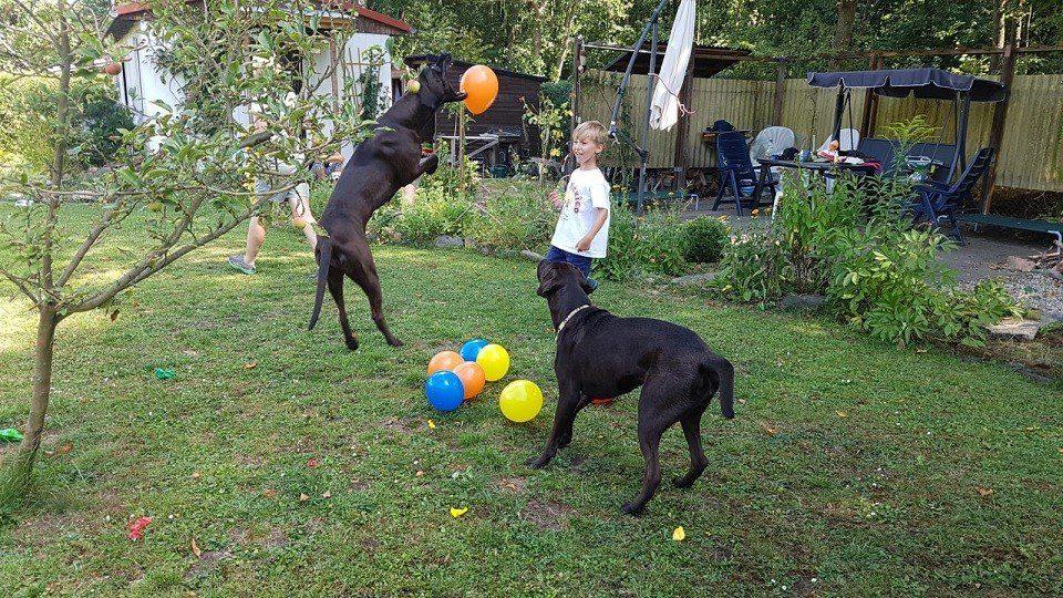 Luftballonspaß in der Hundeschule Dresden und Tierpsychologie Sachsen