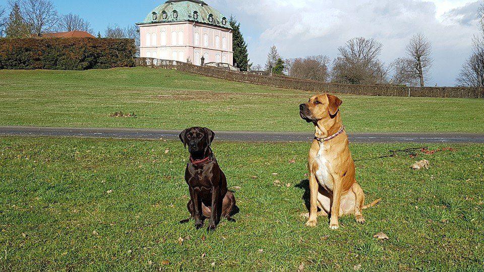Impressum der Hundeschule Dresden und Tierpsychologie Sachsen