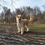 Kleiner Hund auf großem Baum