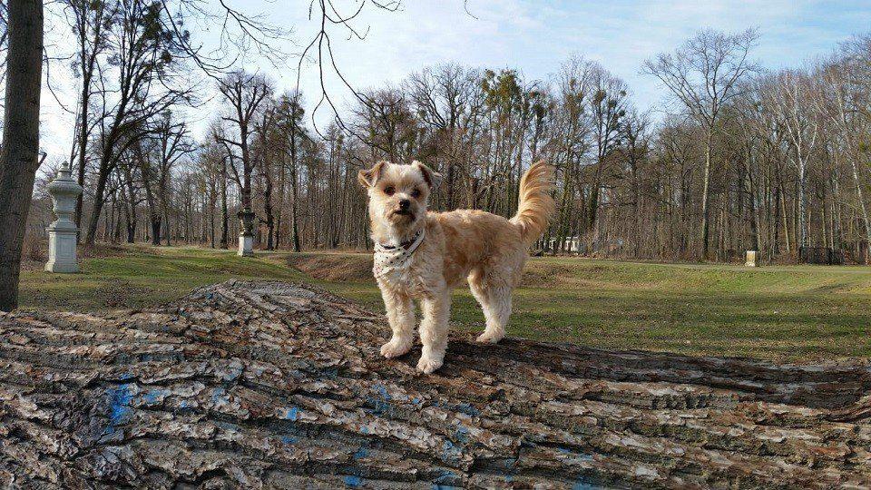 Kleiner Hund auf großem Baum in der Hundeschule Dresden und Tierpsychologie Sachsen