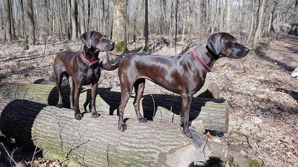 Hundeschule Dresden Preise