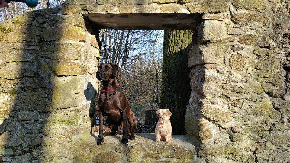 Mauerblümchen in der Hundeschule Dresden und Tierpsychologie Sachsen