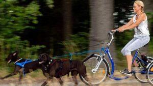 Zughundeausbildung in der Hundeschule Dresden und Tierpsychologie Sachsen