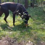 Pilzspürhund