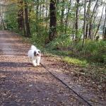 Wanderung neben dem Großteich Hundeschule Moritzburg