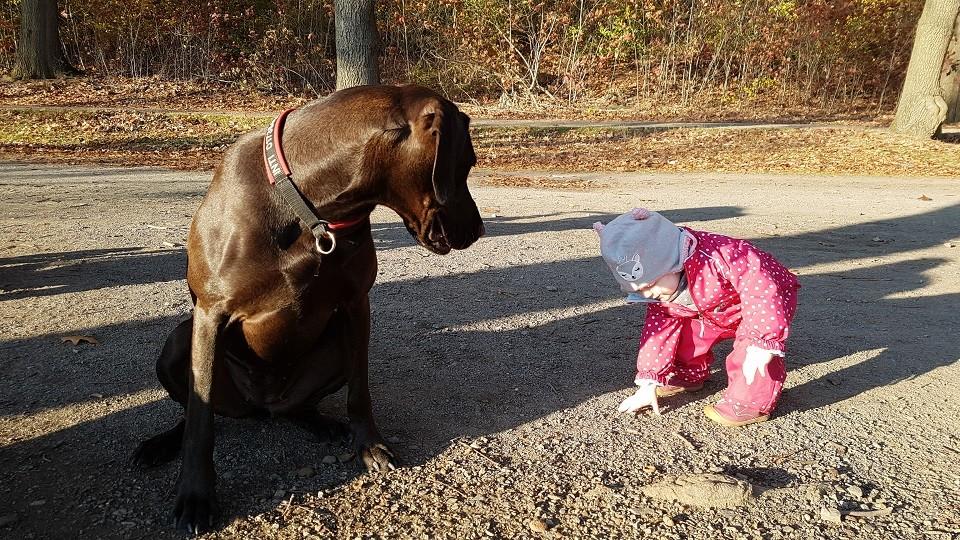 Kind und Hund Hundeschule Dresden Iris Bahrke4