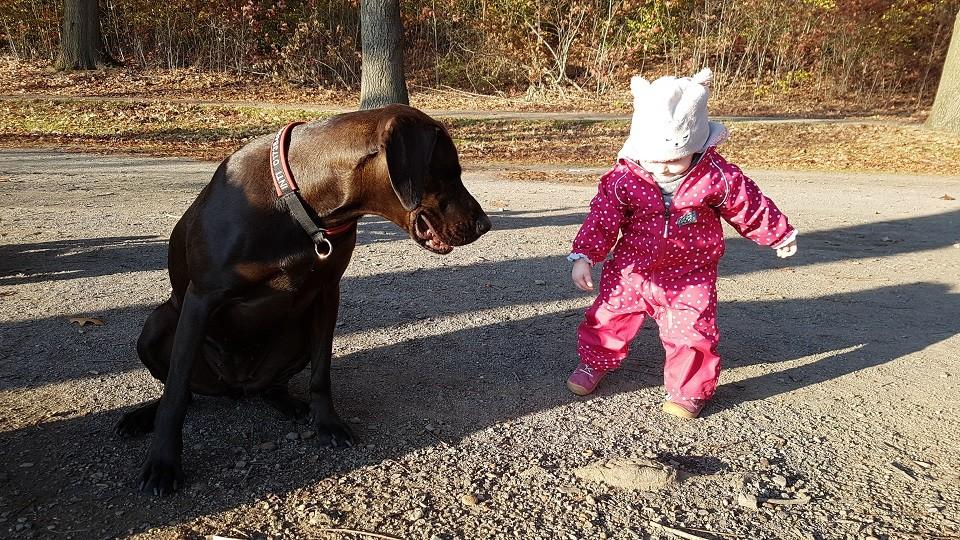 Kind und Hund Hundeschule Dresden Iris Bahrke3