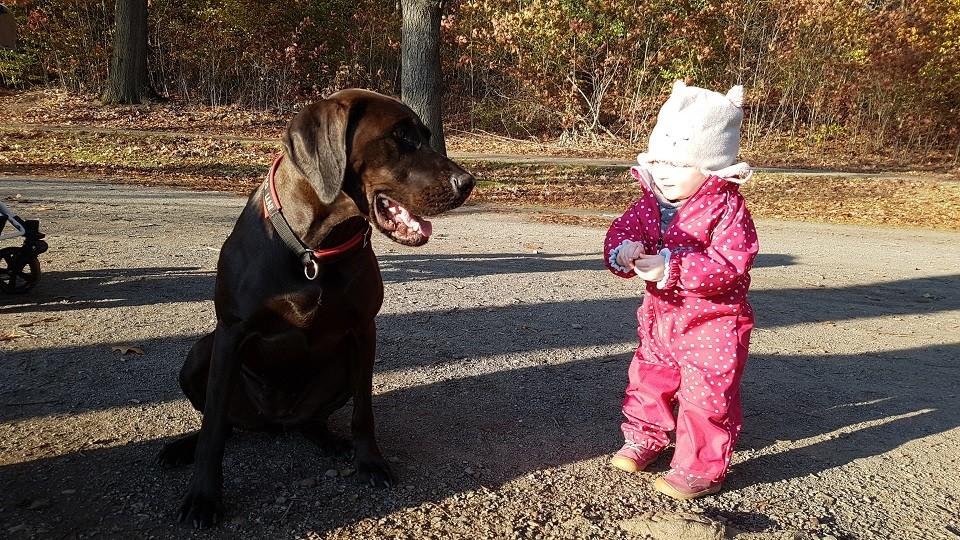Kind und Hund Hundeschule Dresden Iris Bahrke1