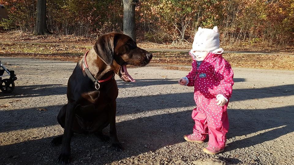 Kind und Hund Hundeschule Dresden Iris Bahrke2
