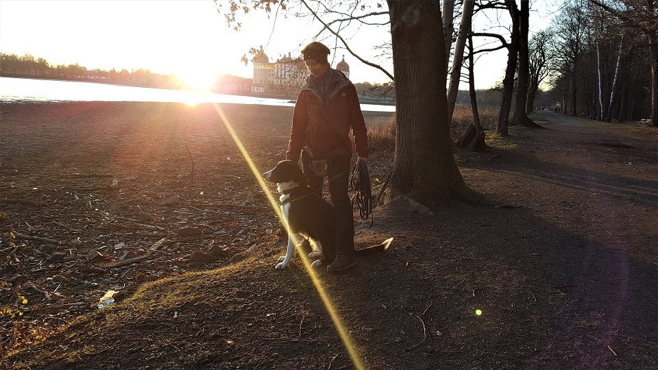 Hundeschule Moritzburg beim Sonnenuntergang