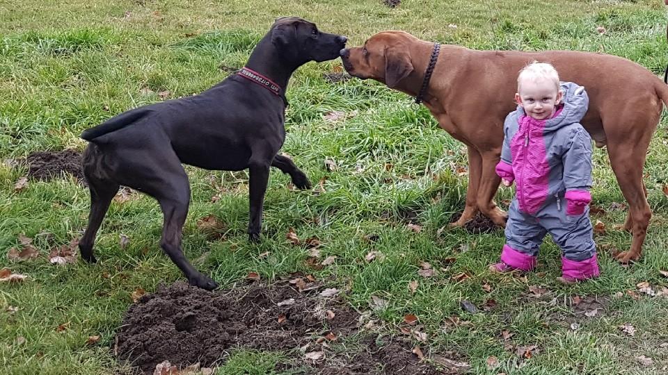 Kind und Hund Hundeschule Dresden Iris Bahrke8