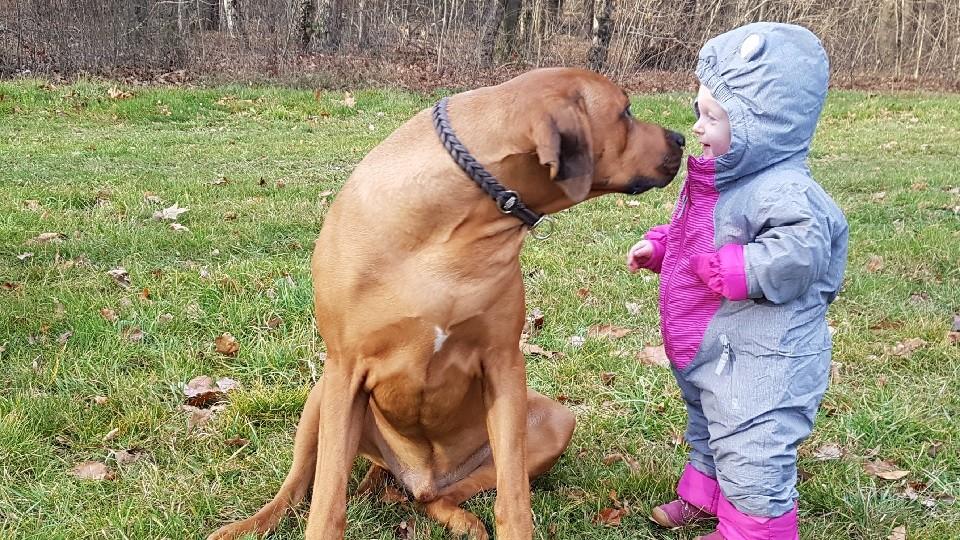 Kind und Hund Hundeschule Dresden Iris Bahrke7