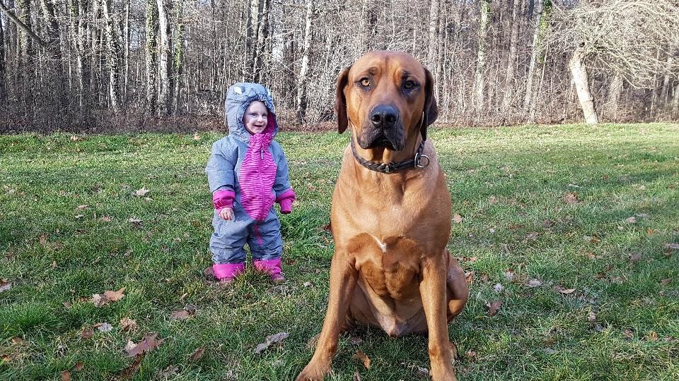 Kind und Hund Hundeschule Dresden Iris Bahrke6