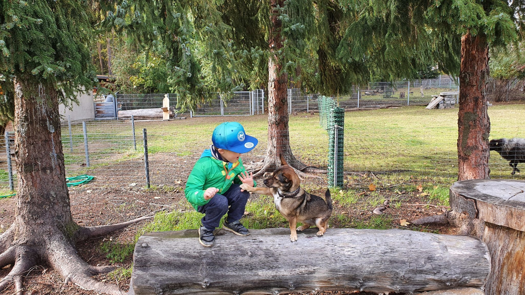 Kind mit Hund auf Baumstamm