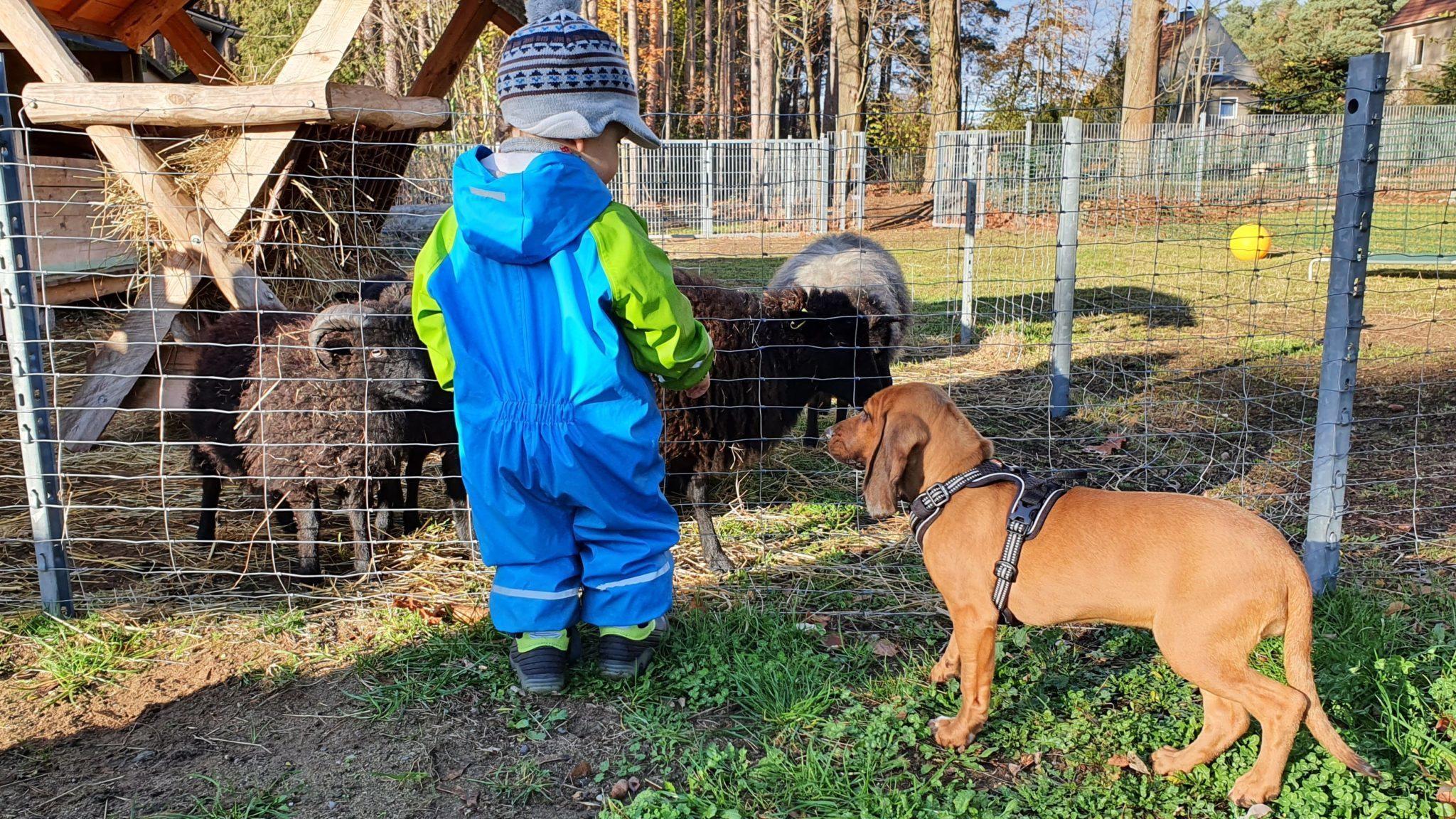 Kind in der Hundeschule und Tierpsychologie Iris Bahrke-Schabacker