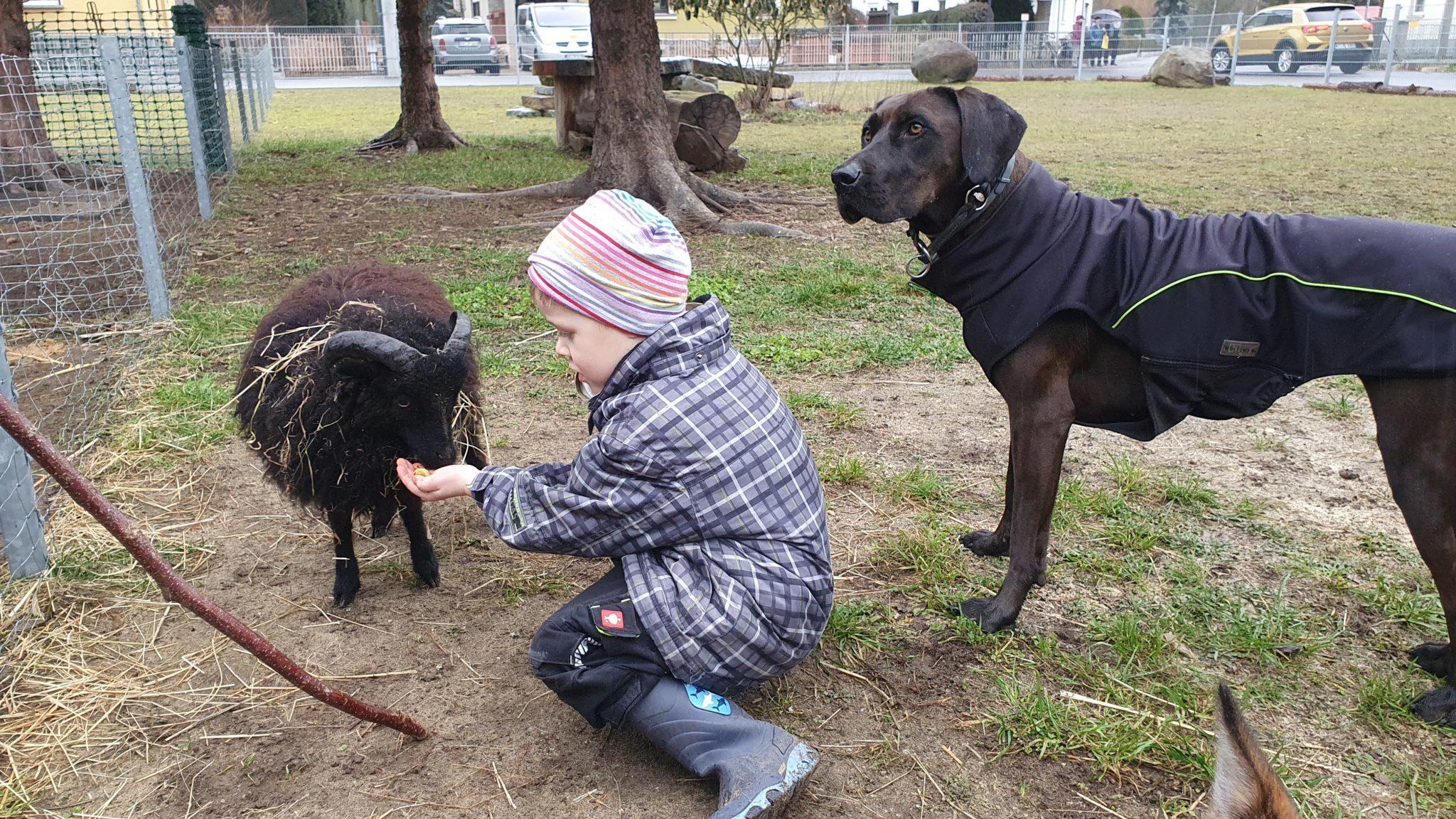 Schaf und Hund